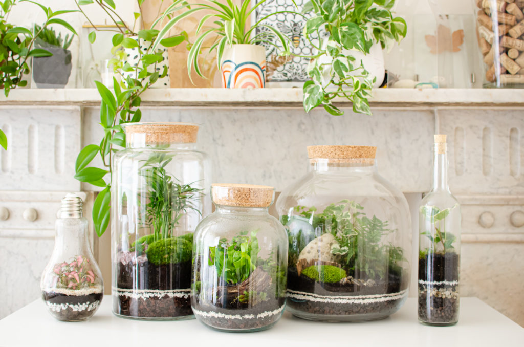 few sizes and shapes of closed terrariums